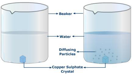 Water potential of potato tissue