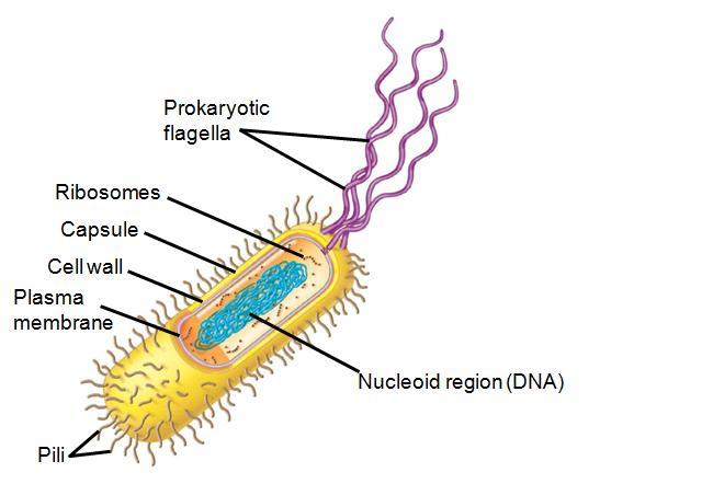 Cell Structure Learn Biology Class 9 Amrita Vidyalayam