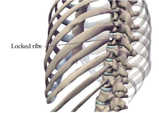 Bones And Skeleton Learn Biology Class 6 Amrita Vidyalayam
