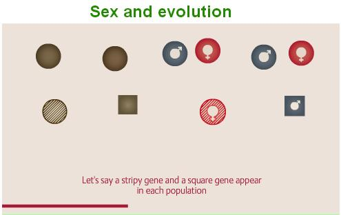 Sex reproduction games