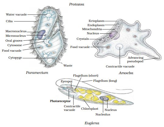 Classification of Living Organisms (Learn) : Biology : Class