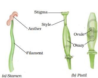 Unisexual reproduction in plants